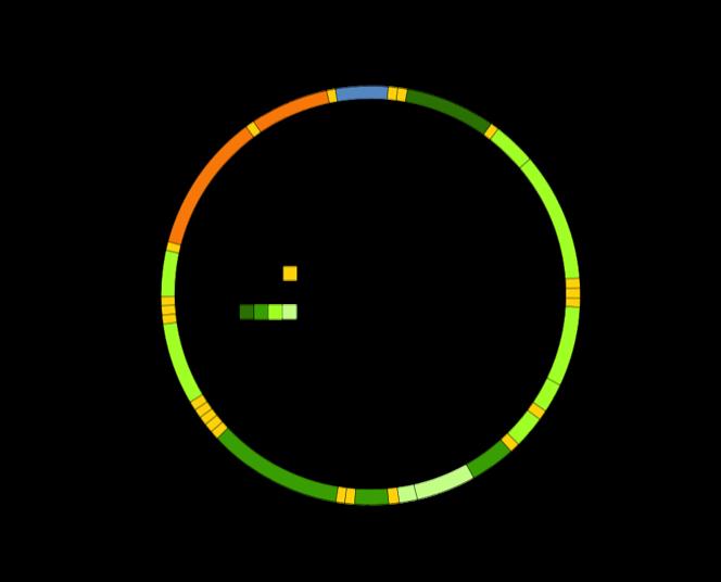 diagram of mitochondrial dna
